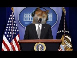 DOGE PLAYS CSGO?! funny moments! 3