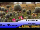 National Geographic: Взгляд изнутри - Афганский героин national geographic: dpukzl bpyenhb - faufycrbq uthjby