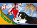 Приключения Давида и его друзей ИСТОРИЯ КОТА ТЕОДОРА Теодор - супер кот Про котов ВИДЕО ДЛЯ ДЕТЕЙ