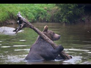 Приколы на рыбалке подборка редких ну очень смешных видео