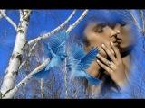 Я Такой Не Была, Красивый #Песни о Любви, Наталья Бучинская