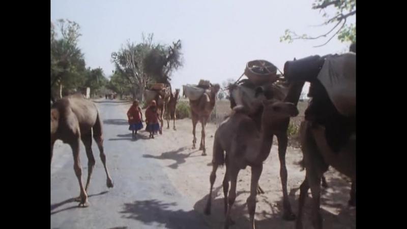 Rajasthan, musique du desert thar (yves billon agnes nordmann, 1992)