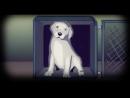 Топ 5 самых трогательных видео про животных, которые заставят вас заплакать. До слез!!! 2 Часть