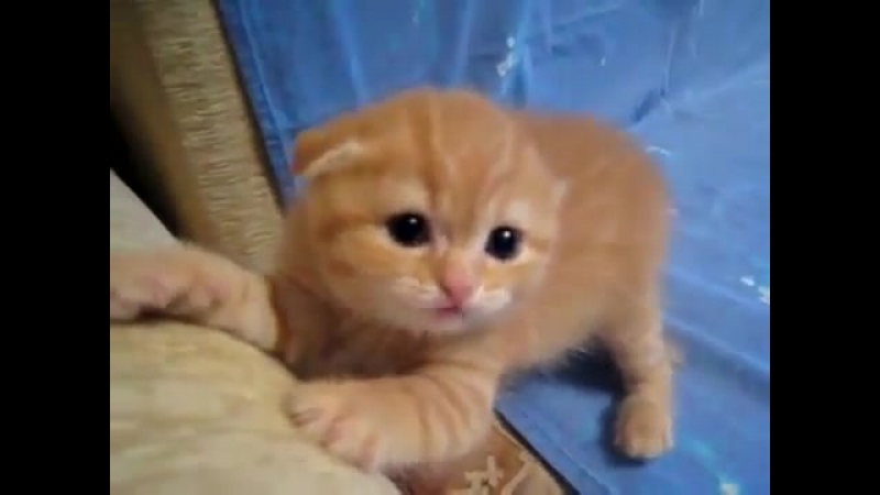 Vitamin.Z (Красивый котенок)