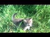 спасене кошеня 7