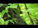 Aegithalos caudatus 3(Long-tailed Tit, Длиннохвостая синица, Ополовник, гнездо 1.5 метров) Moscow HD 2016-1