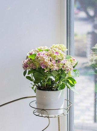 Доставка живые цветы улан удэ в контакте #10