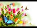 Красивая песнь о любви ЕДИНСТВЕННОЙ ЛЮБИМОЙ . Стихи о.Олега Моленко