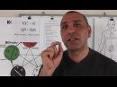 Гипоталамус и точка ЦИ ХАЙ VC 6