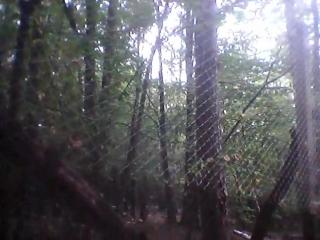Дикие кабаны в лесу за клеткой нашли..