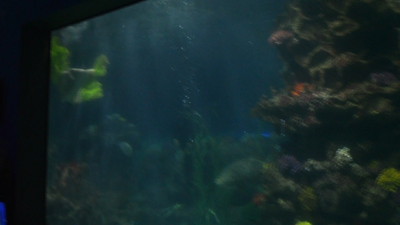 Шоу русалок в океанариуме Винперл