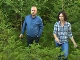 5 канал: Лесосырье для Архангельского ЦБК