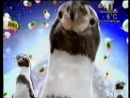 Заставка канала (СТС-Сигма, 2005) Пингвины
