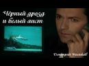 Дмитрий Маликов - Чёрный дрозд и белый аист
