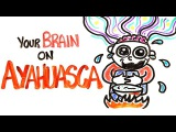 Your Brain On Ayahuasca The Hallucinogenic Drug
