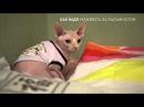 как надо ухаживать за лысым котом