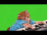 Chroma key (Green Screen) - Make Your Own Keyboard Cat  | Хромакей - Кот играет на пианино