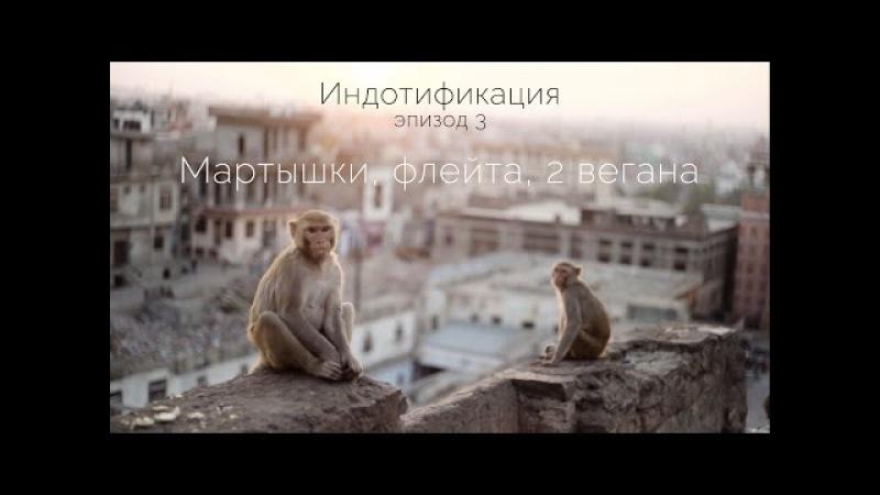 Индотификация - Эпизод 3 - Мартышки, флейта, 2 вегана