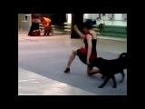 Танцы собаки тренеровка Минск dogs Mapei-Don't Wait собачья жизнь