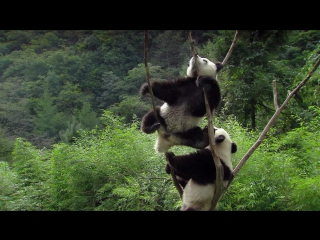 День в мире животных