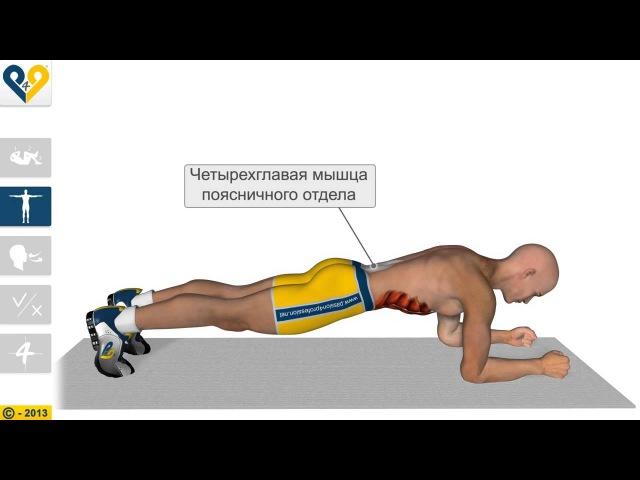 Планка - упражнение для укрепления мышц пресса и всего тела
