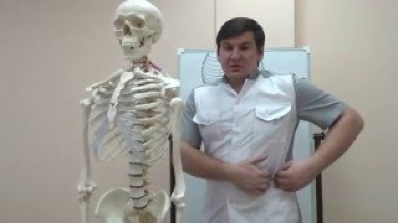 Косые мышцы живота Как тренировать и растягивать