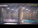 Рисковый котенок перелез через барьер к другу-щенку
