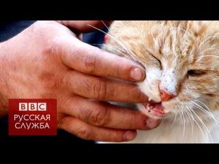 Кошачий заповедник в осажденном Алеппо