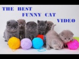 The Best Funny Cat & Cute Kittens | Fail Animals Video № 31 | Morsomme Katter № 31