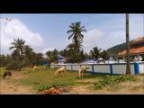 Индия Гоа Сегодня. Пляж Агонда Agonda Beach, India, Goa. Nowdays SV HD