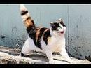 Видео приколи про котов часть 3