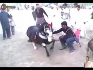 лошадь танцует под лезгинку - YouTube
