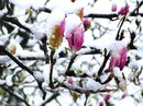 Нет, это не апрель с ума сошёл…