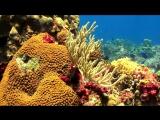 Релакс-видео подводный мир 2 часа