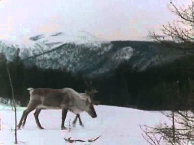 Баргузинский заповедник (1971) фильм смотреть онлайн