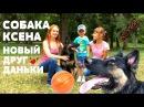 Собака Ксена, Новый друг Даньки. Гуляем с собакой в парке. We walk the dog