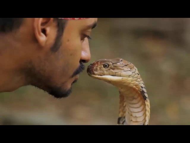 Поцелуй кобры - поцелуй судьбы