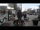 Этот парень выгуливает собак по улице самым шокирующим образом