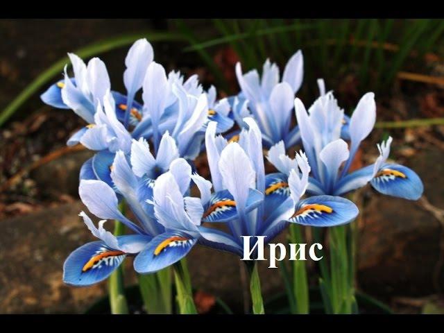 Теневыносливые цветы для сада Цветы фото и названия