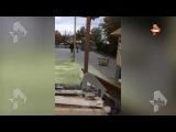 """Видео: В кинотеатре """"Иллюзион"""" в Москве под напором воды рушится потолок"""