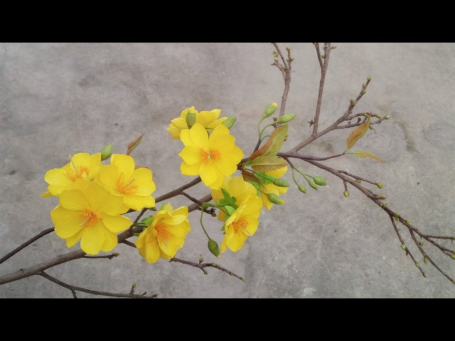 ABC TV   How To Make Yellow Apricot Blossom Paper Flower From Crepe Paper - Craft Tutorial