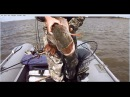 видео новинка 2016 год зимняя и осенняя рыбалкасупер место на щуку и плотвуvideo new ...