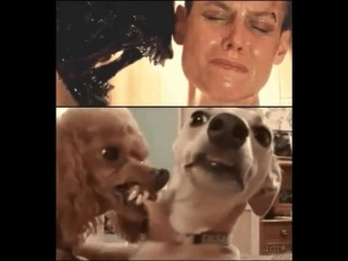 Dogs cosplay Alien 3