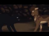 Коты-воители (клип под песню:Всё решино)