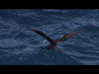 BBC: Жизнь. Серия 5. Птицы (2009)