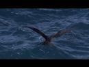 BBC Жизнь Серия 5 Птицы 2009