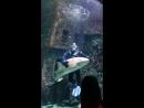 Водолаз среди акул