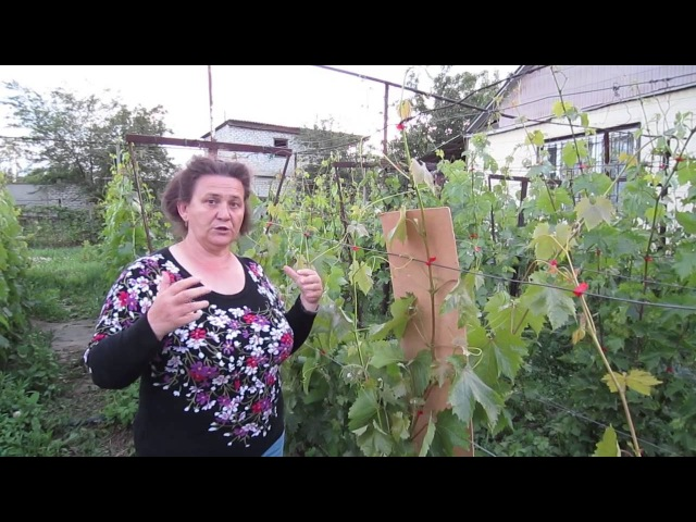 1 часть фильма Какие пасынки оставлять на виноградной лозе?