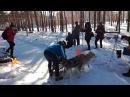 В Липецке в Парке Победы собаки соревновались в беге на скорость