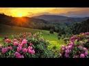 Красивое чтение Корана на фоне природы